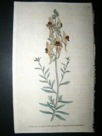 Curtis 1789 Hand Col Botanical Print. Melancholy or Black Flower'd Toad Flax 74